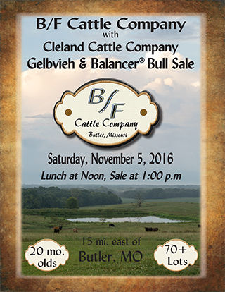 bf-cattle-co-2016-sale-catalog-1