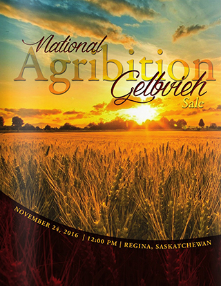 national-agribition-gelbvieh-sale