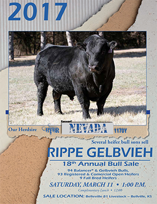 Rippe_Gelbvieh_2017_Bull_Sale_low_res-1