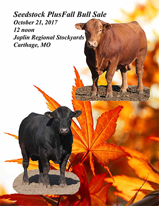Seedstock Plus Fall Sale Catalog 2017-1