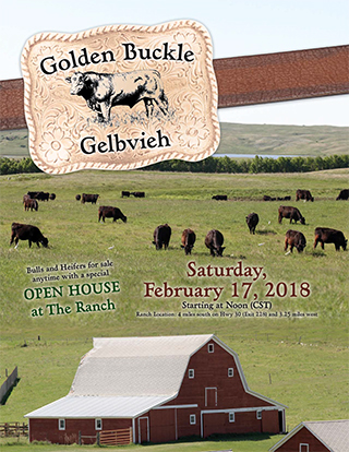 Golden Buckle_Cover_2018.indd