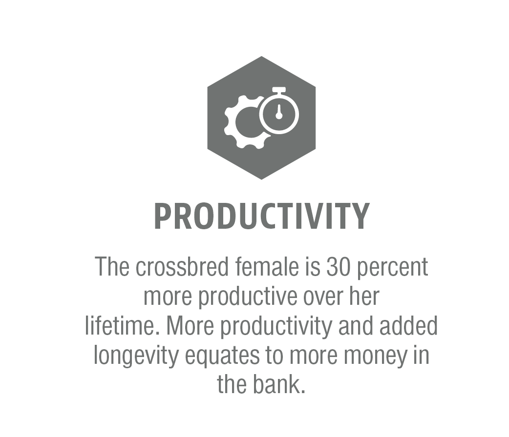 ProductivityGraphic