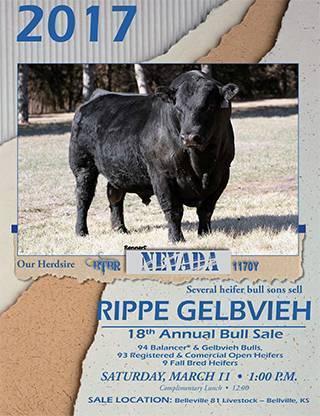 Rippe_Gelbvieh_2017_Bull_Sale_low_res-1