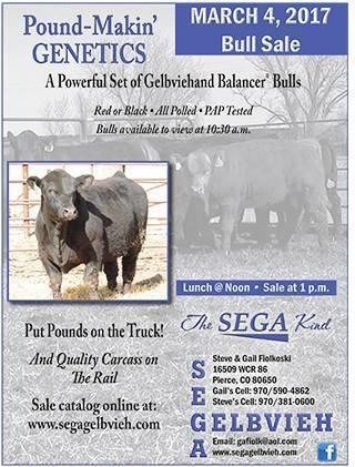 SEGA_Gelbvieh_bull_sale_flyer