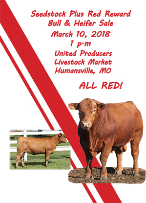 Red Sale Catalog 2018-1