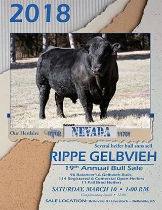 Rippe_Gelbvieh_2018_Full_catalog-1